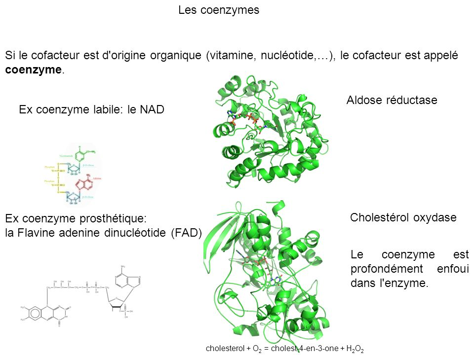 Ex coenzyme labile: le NAD