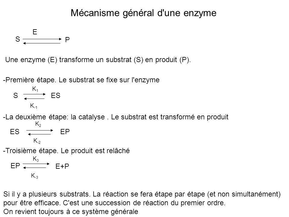 Mécanisme général d une enzyme