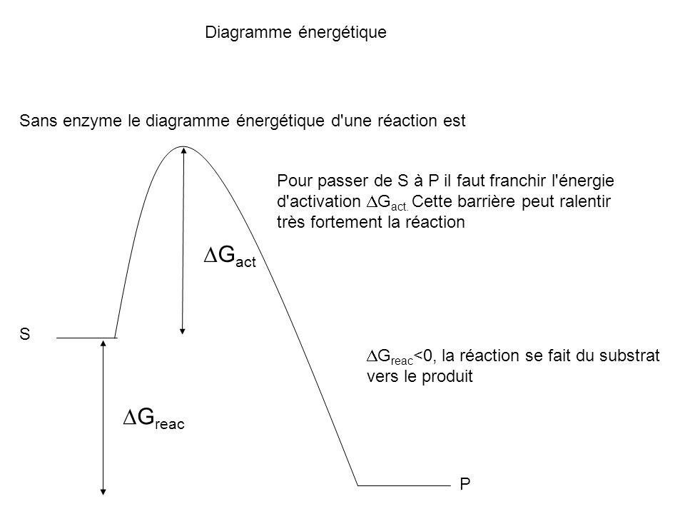 DGact DGreac Diagramme énergétique