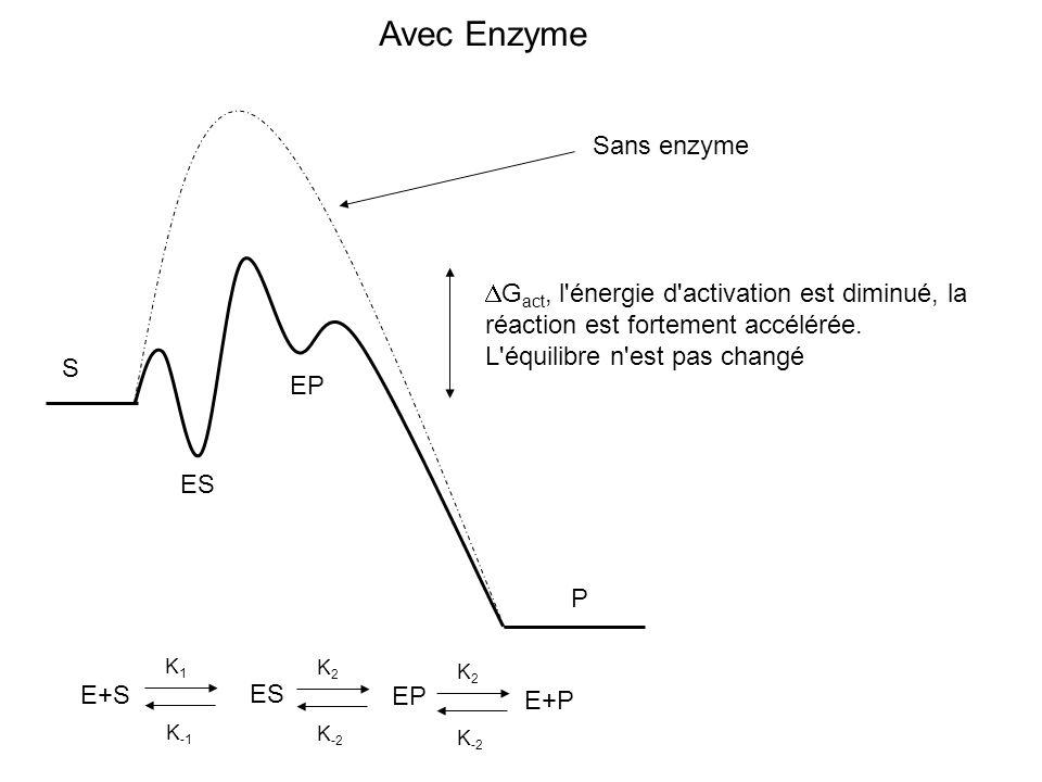 Avec Enzyme Sans enzyme