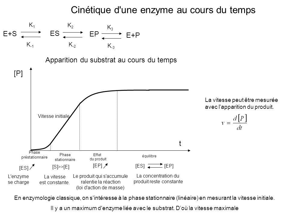 Cinétique d une enzyme au cours du temps