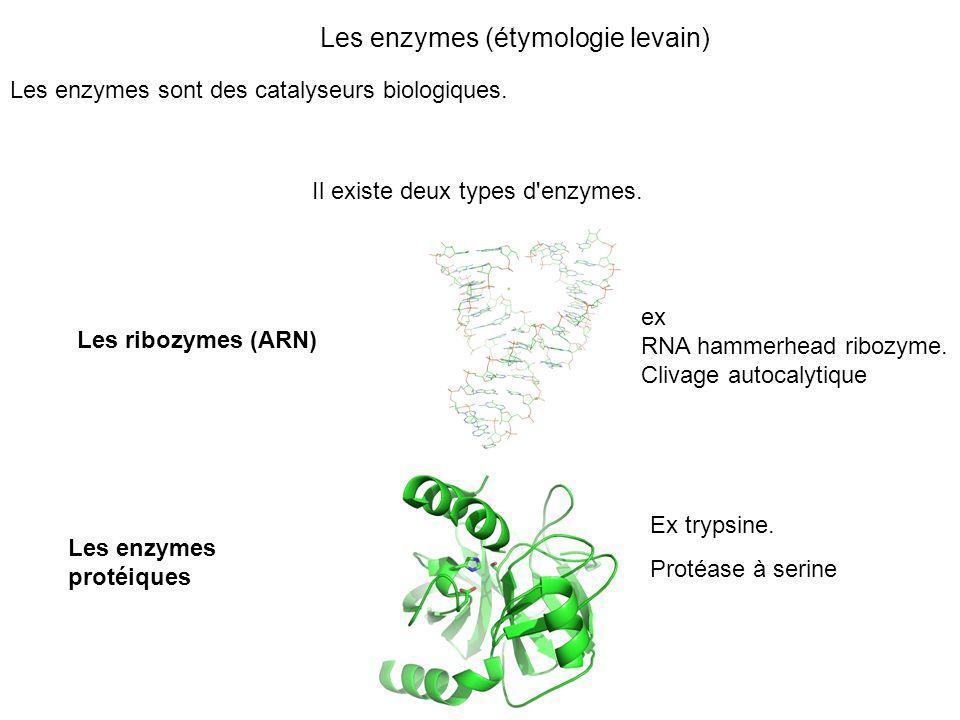 Les enzymes (étymologie levain)