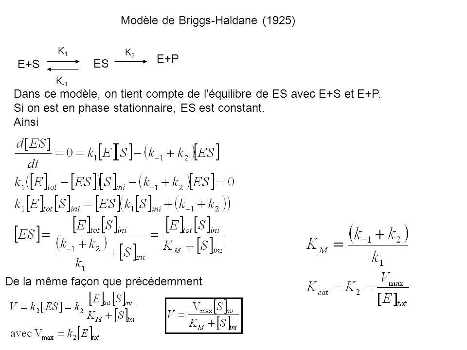 Modèle de Briggs-Haldane (1925)