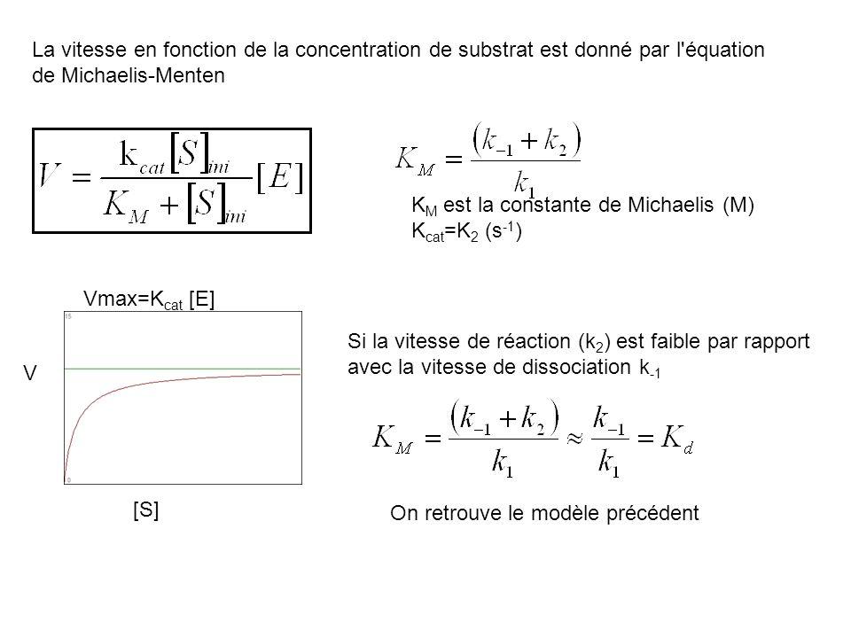 La vitesse en fonction de la concentration de substrat est donné par l équation de Michaelis-Menten