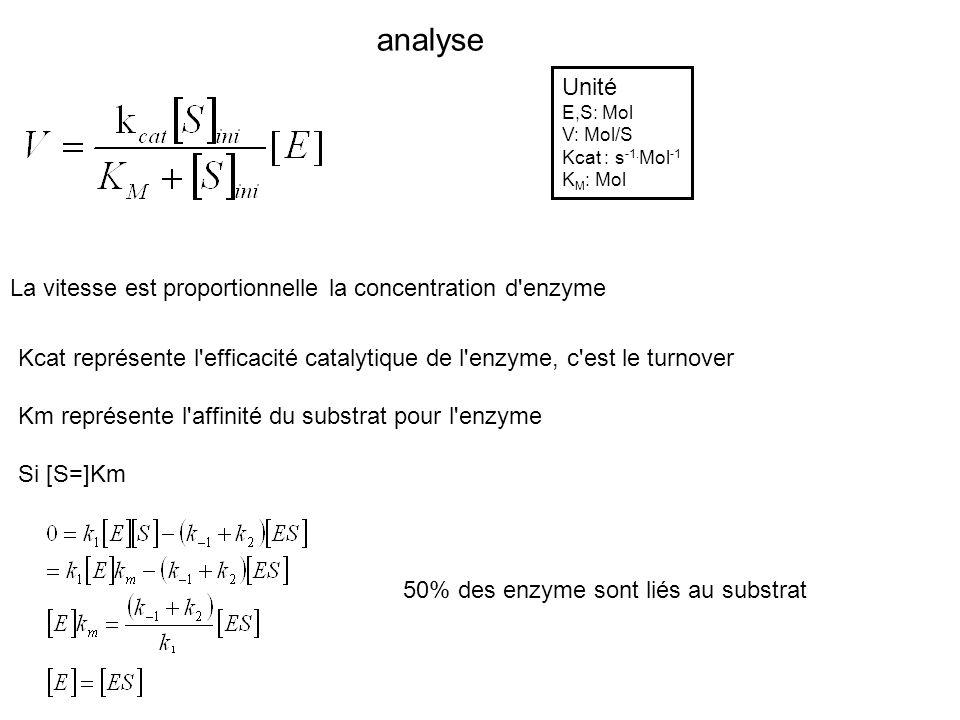 analyse Unité La vitesse est proportionnelle la concentration d enzyme