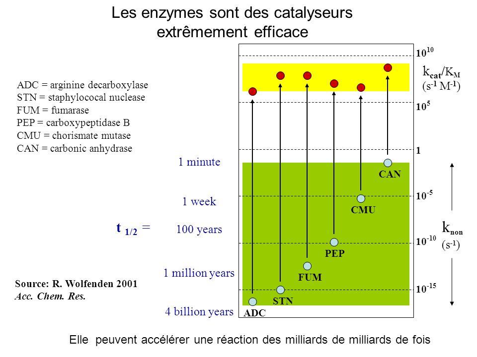 Les enzymes sont des catalyseurs extrêmement efficace