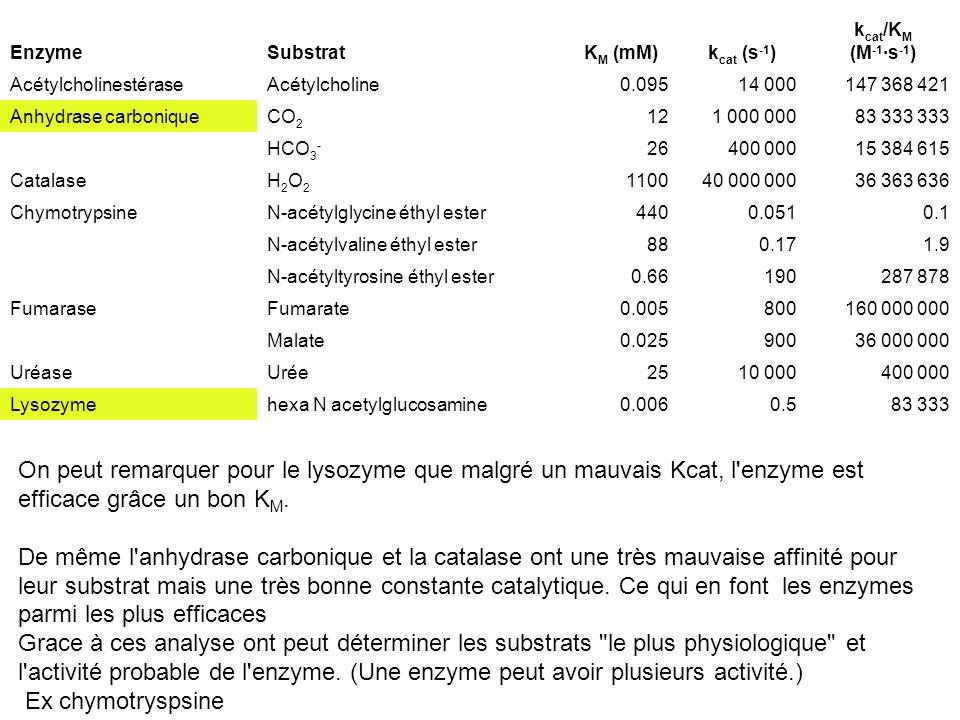 Enzyme Substrat. KM (mM) kcat (s-1) kcat/KM. (M-1·s-1) Acétylcholinestérase. Acétylcholine. 0.095.