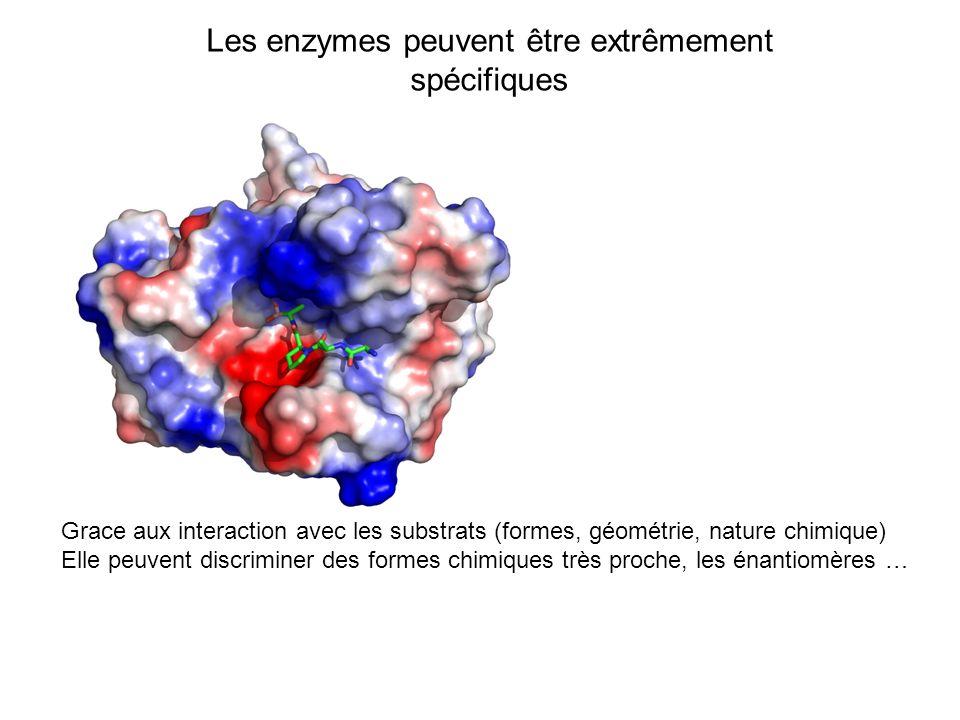 Les enzymes peuvent être extrêmement spécifiques