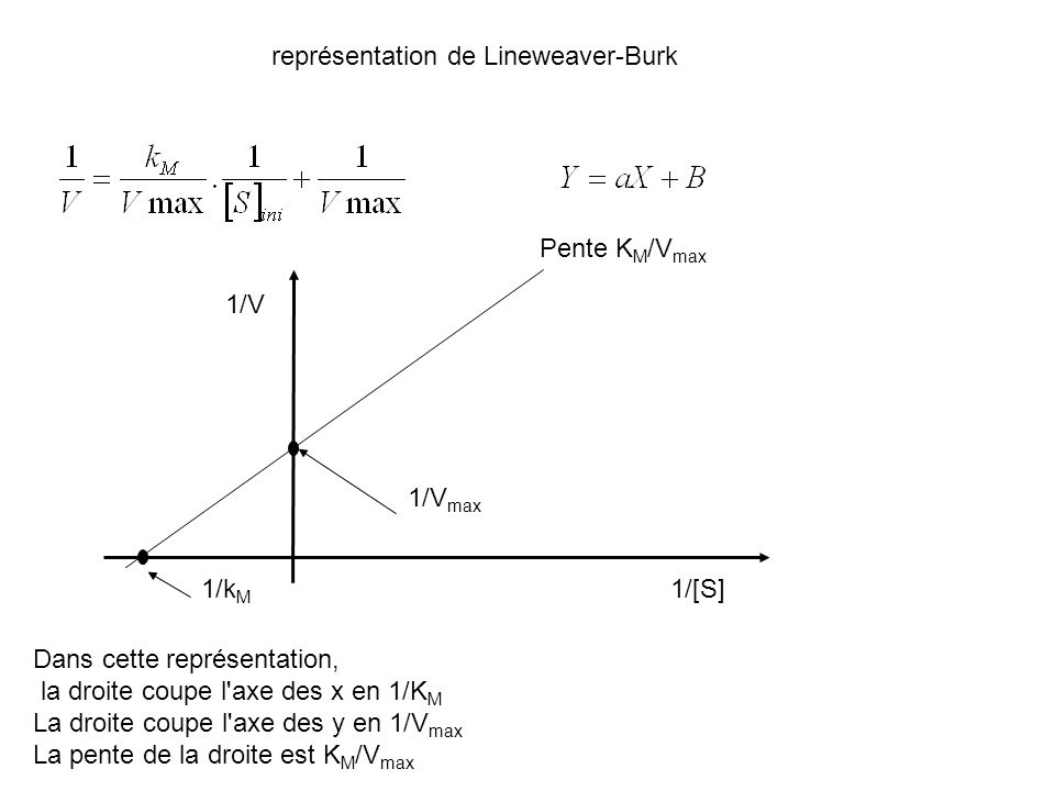 représentation de Lineweaver-Burk