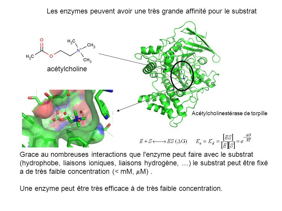 Les enzymes peuvent avoir une très grande affinité pour le substrat