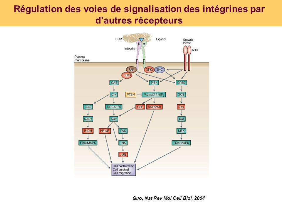 Régulation des voies de signalisation des intégrines par d'autres récepteurs
