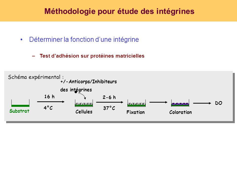 Méthodologie pour étude des intégrines