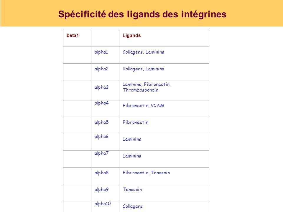 Spécificité des ligands des intégrines
