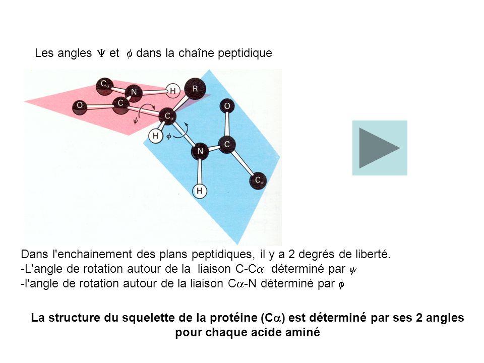 Les angles  et  dans la chaîne peptidique