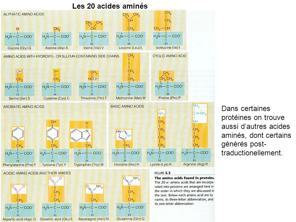 Les 20 acides aminés Dans certaines protéines on trouve aussi d'autres acides aminés, dont certains générés post-traductionellement.