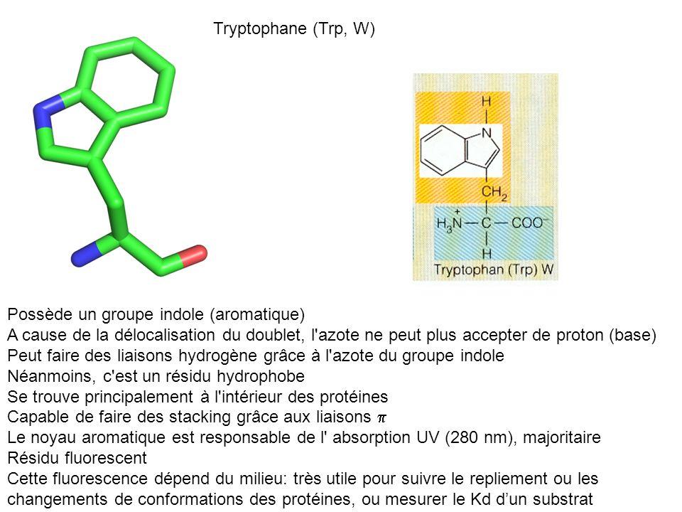 Tryptophane (Trp, W) Possède un groupe indole (aromatique) A cause de la délocalisation du doublet, l azote ne peut plus accepter de proton (base)