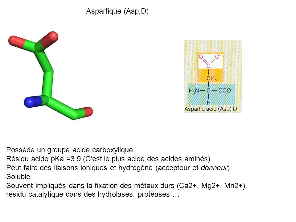 Aspartique (Asp,D) Possède un groupe acide carboxylique. Résidu acide pKa =3.9 (C est le plus acide des acides aminés)