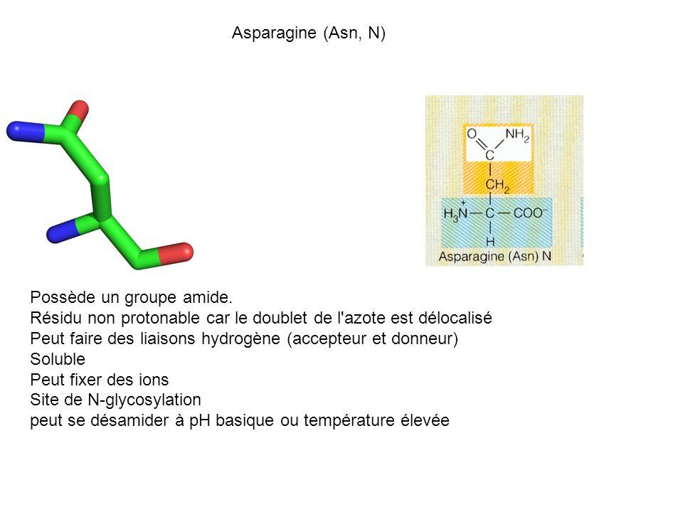 Asparagine (Asn, N) Possède un groupe amide. Résidu non protonable car le doublet de l azote est délocalisé.