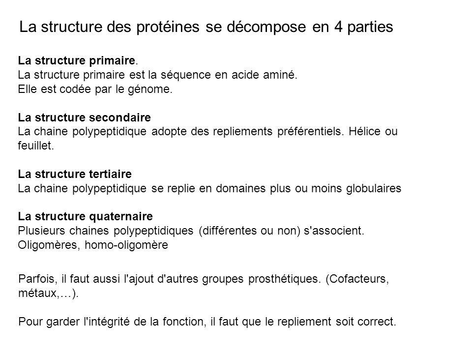La structure des protéines se décompose en 4 parties