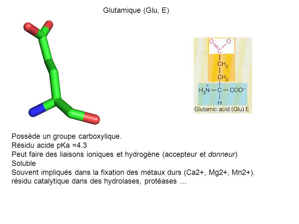 Glutamique (Glu, E) Possède un groupe carboxylique. Résidu acide pKa =4.3. Peut faire des liaisons ioniques et hydrogène (accepteur et donneur)