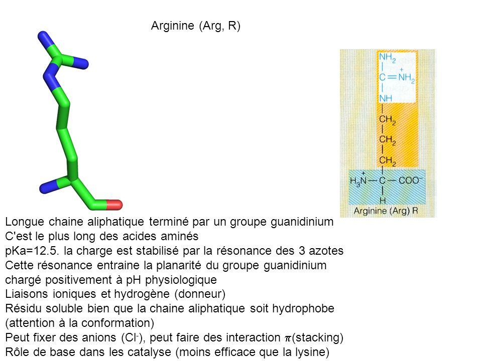 Arginine (Arg, R) Longue chaine aliphatique terminé par un groupe guanidinium. C est le plus long des acides aminés.