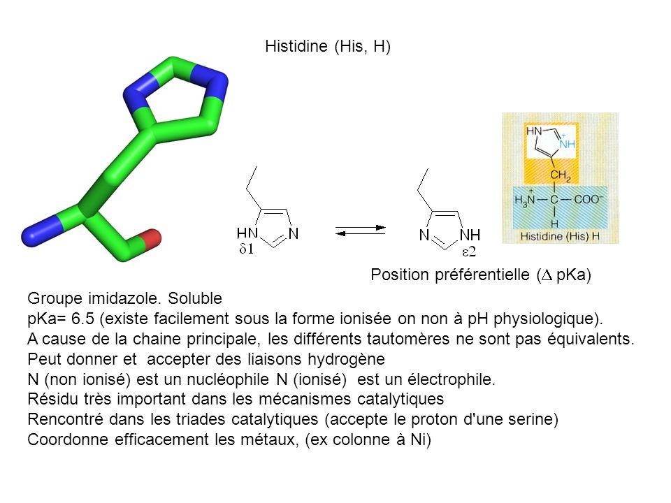 Histidine (His, H) Position préférentielle (D pKa) Groupe imidazole. Soluble.