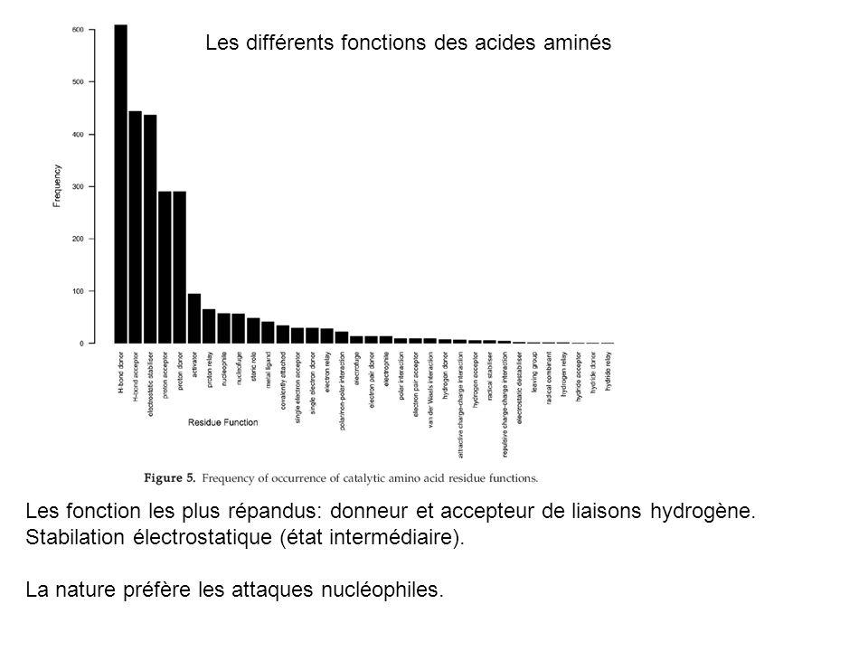 Les différents fonctions des acides aminés