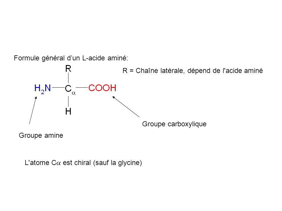 Formule général d'un L-acide aminé: