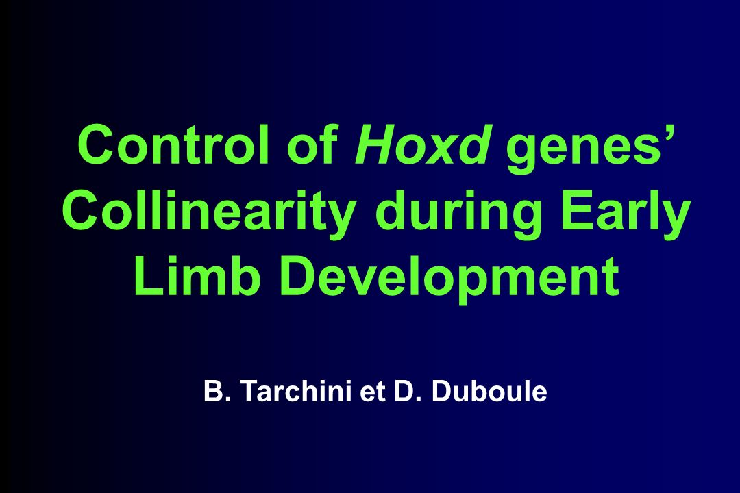 Control of Hoxd genes' Collinearity during Early Limb Development