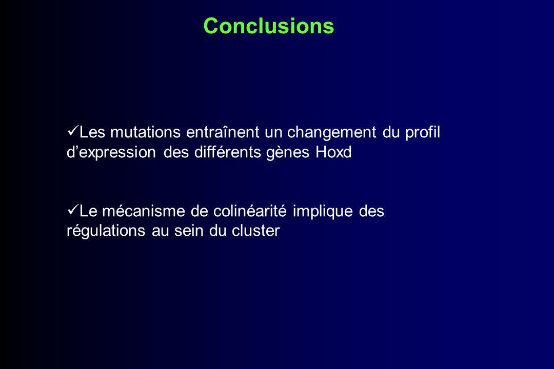 Conclusions Les mutations entraînent un changement du profil d'expression des différents gènes Hoxd.
