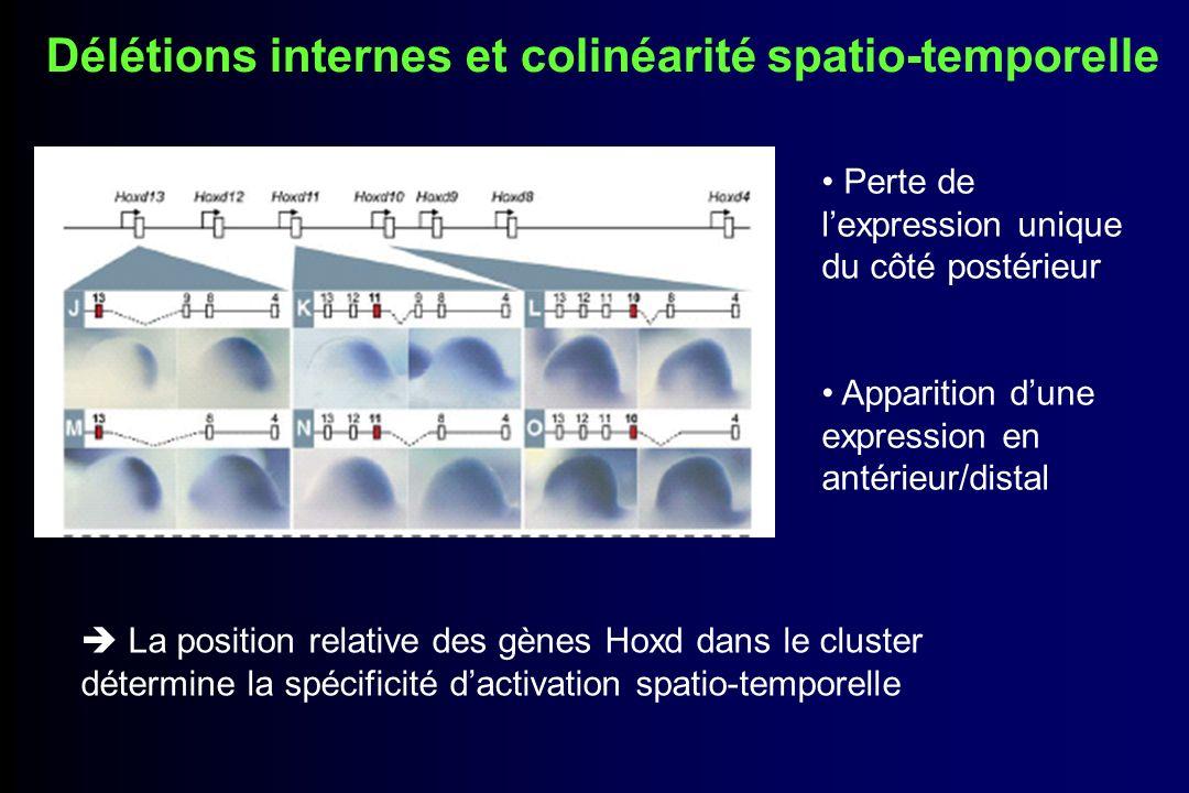Délétions internes et colinéarité spatio-temporelle