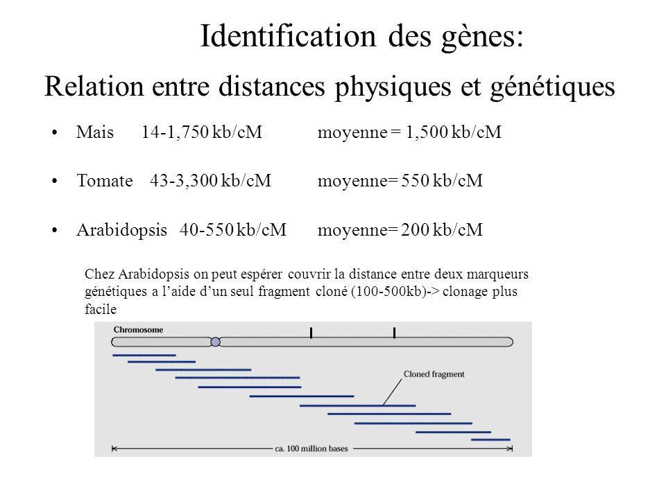 Relation entre distances physiques et génétiques
