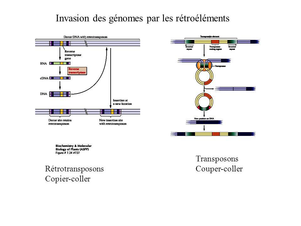 Invasion des génomes par les rétroéléments