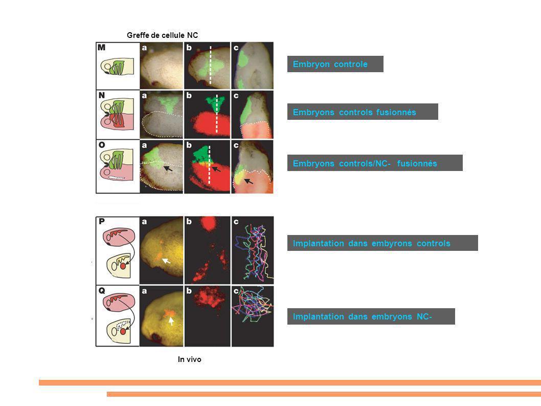 Embryons controls fusionnés