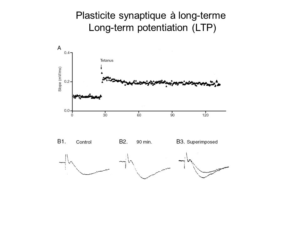 Plasticite synaptique à long-terme Long-term potentiation (LTP)