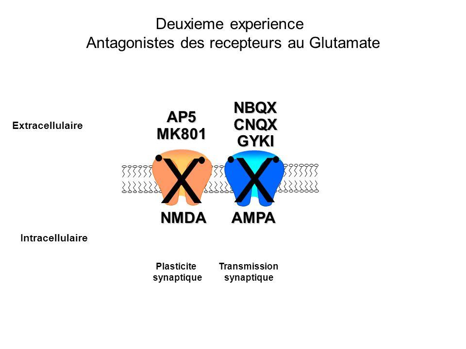 Antagonistes des recepteurs au Glutamate