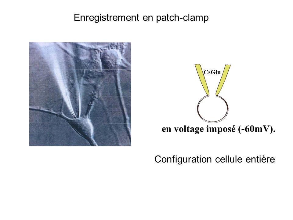 en voltage imposé (-60mV).