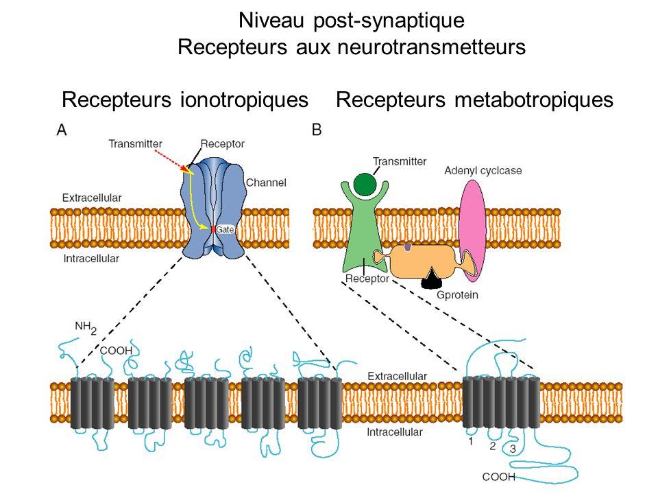Niveau post-synaptique Recepteurs aux neurotransmetteurs