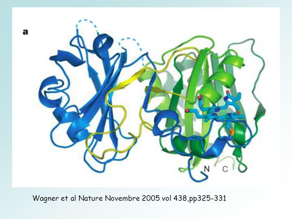 Wagner et al Nature Novembre 2005 vol 438,pp325-331