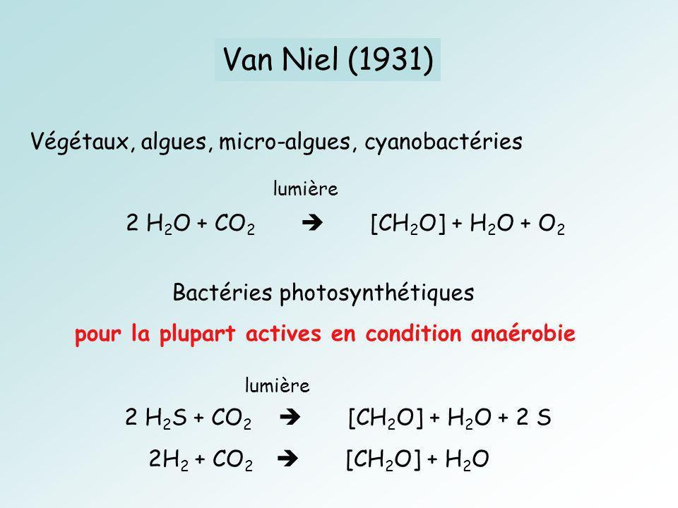 Van Niel (1931) Végétaux, algues, micro-algues, cyanobactéries