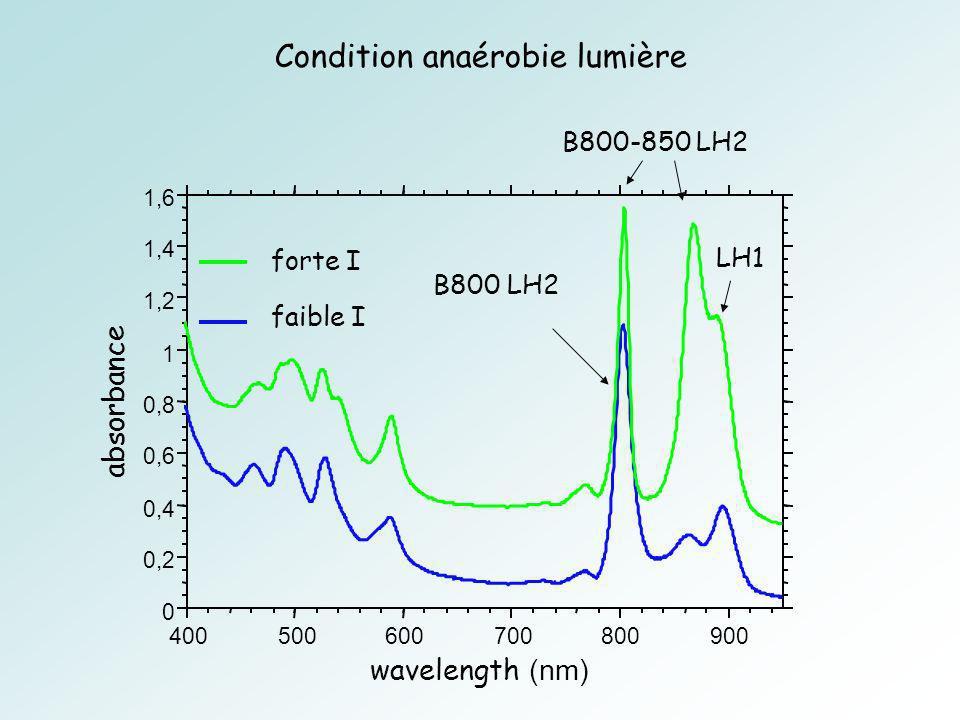Condition anaérobie lumière