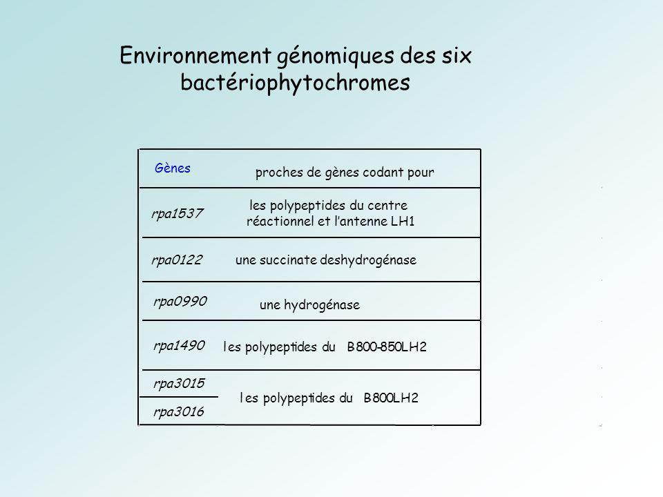 Environnement génomiques des six bactériophytochromes
