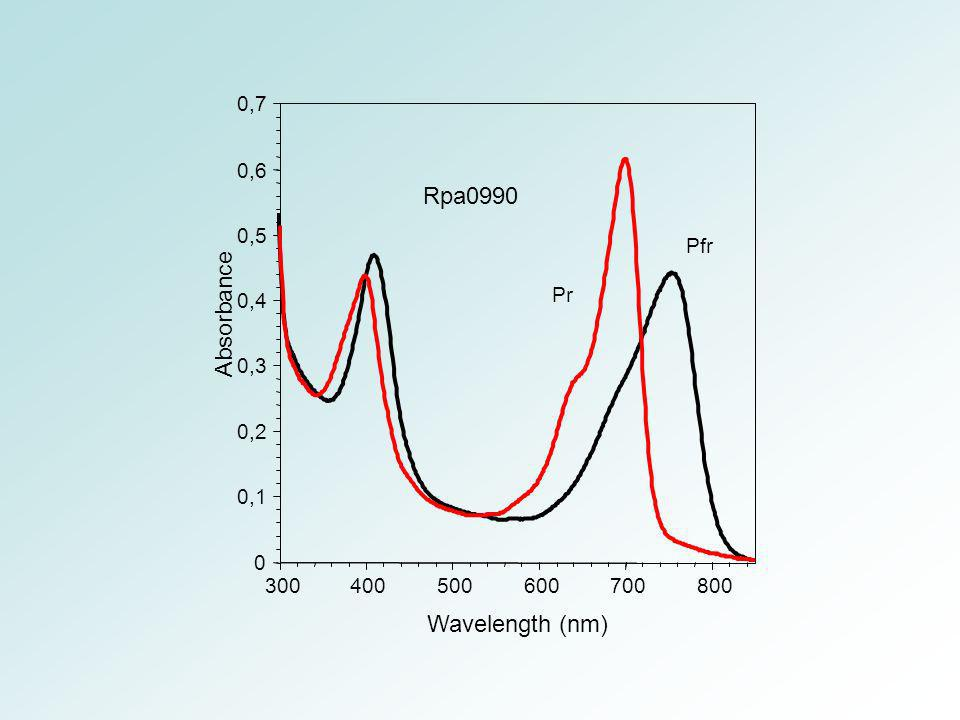 Rpa0990 Absorbance Wavelength (nm) 0,7 0,6 Pr 0,5 Pfr 0,4 0,3 0,2 0,1