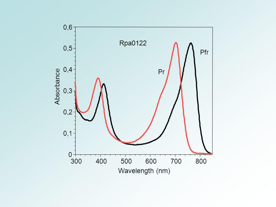 Rpa0122 Absorbance Wavelength (nm) 0,6 Pr 0,5 Pfr 0,4 0,3 0,2 0,1 300