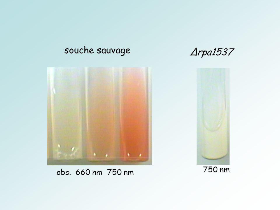 souche sauvage obs. 660 nm 750 nm ∆rpa1537 750 nm
