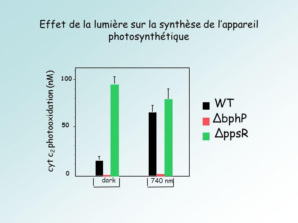 Effet de la lumière sur la synthèse de l'appareil photosynthétique