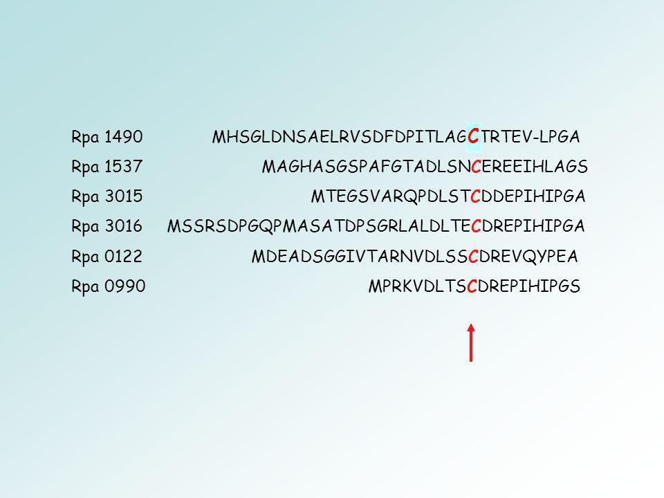 C Rpa 1490 MHSGLDNSAELRVSDFDPITLAGGTRTEV-LPGA
