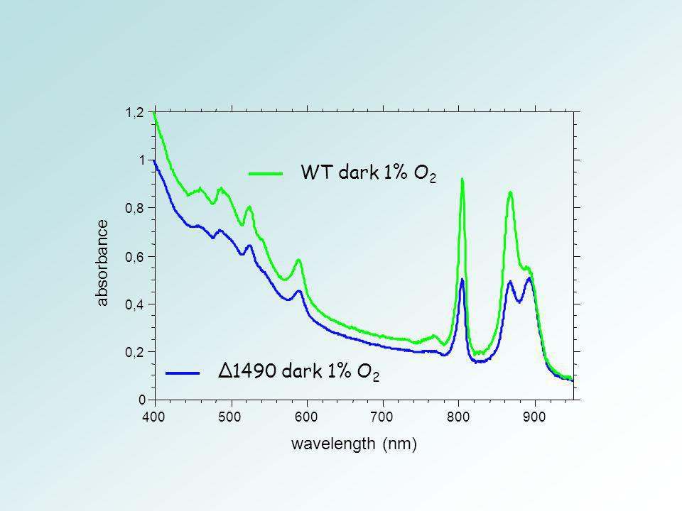 WT dark 1% O2 ∆1490 dark 1% O2 absorbance wavelength (nm) 0,2 0,4 0,6