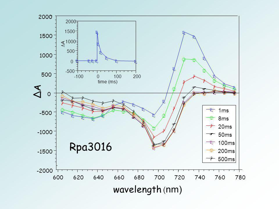 Rpa3016 ∆A wavelength (nm) ms ms 20ms -1000