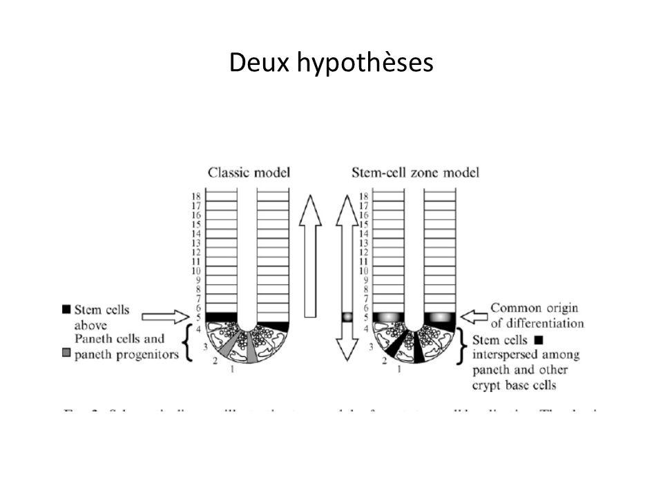 Deux hypothèses